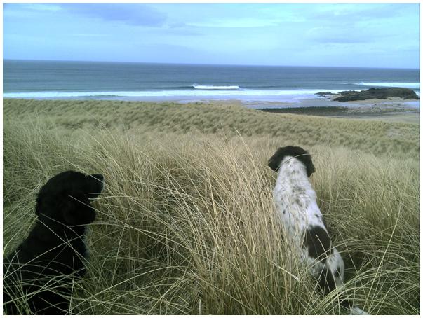 Sandwood bay dogs.jpg
